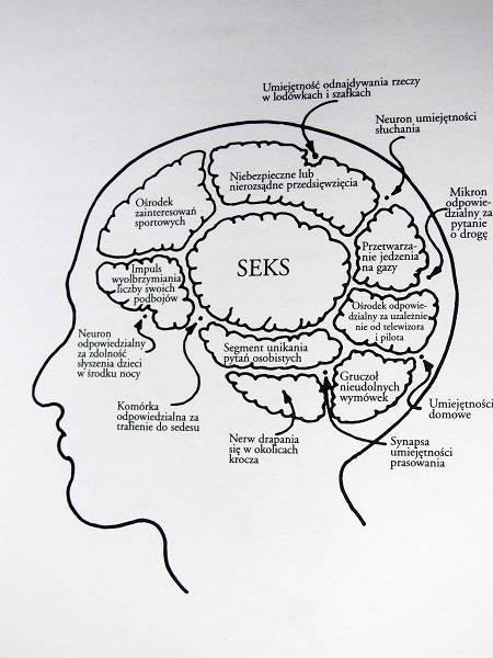 mózg mężczyzny płeć mózgu